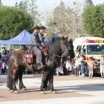 שני שוטרים רכובים על סוסי משטרה