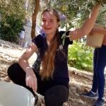 מסיק זיתים בגינה האקולוגית